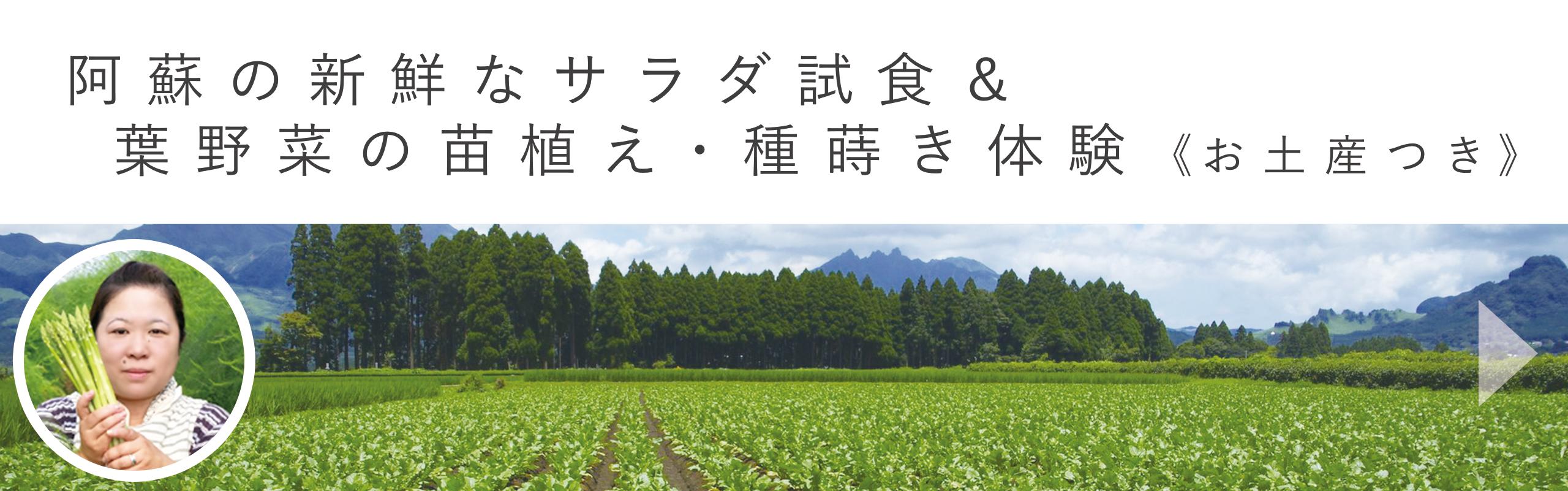 阿蘇の新鮮なサラダ試食と葉野菜の苗植え・種蒔き体験|aini