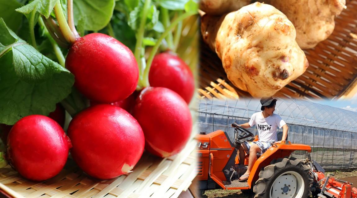 【千葉・野田】ラディッシュと菊芋の収穫&ピクルスづくり〜トラクターにも乗っちゃおう〜