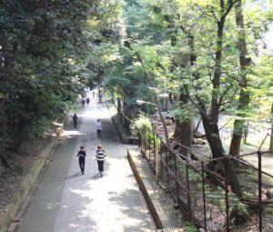 【渋谷駅】SHIBUlYAの森・ターミナル駅から駅近の森へご案内!