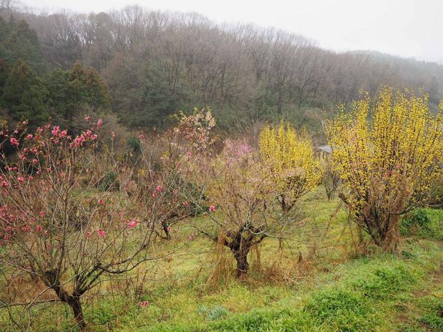 花農園の自然