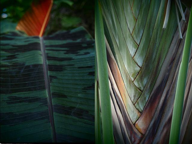 熱帯植物館の写真