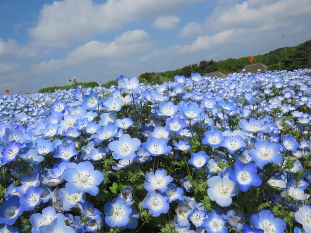 日本の絶景100選 世界に誇る日本の美しい景色を見に行こう Tabica Life