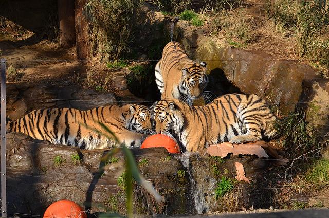 無料開放の日 - 多摩動物公園の口コミ - トリップア …